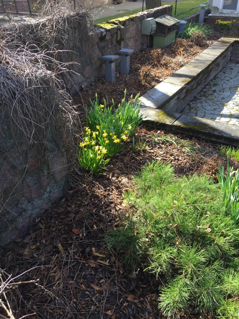Eira Ehrensvärdintie kukat keltaiset